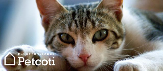 Petcoti 公式Facebookページのご案内